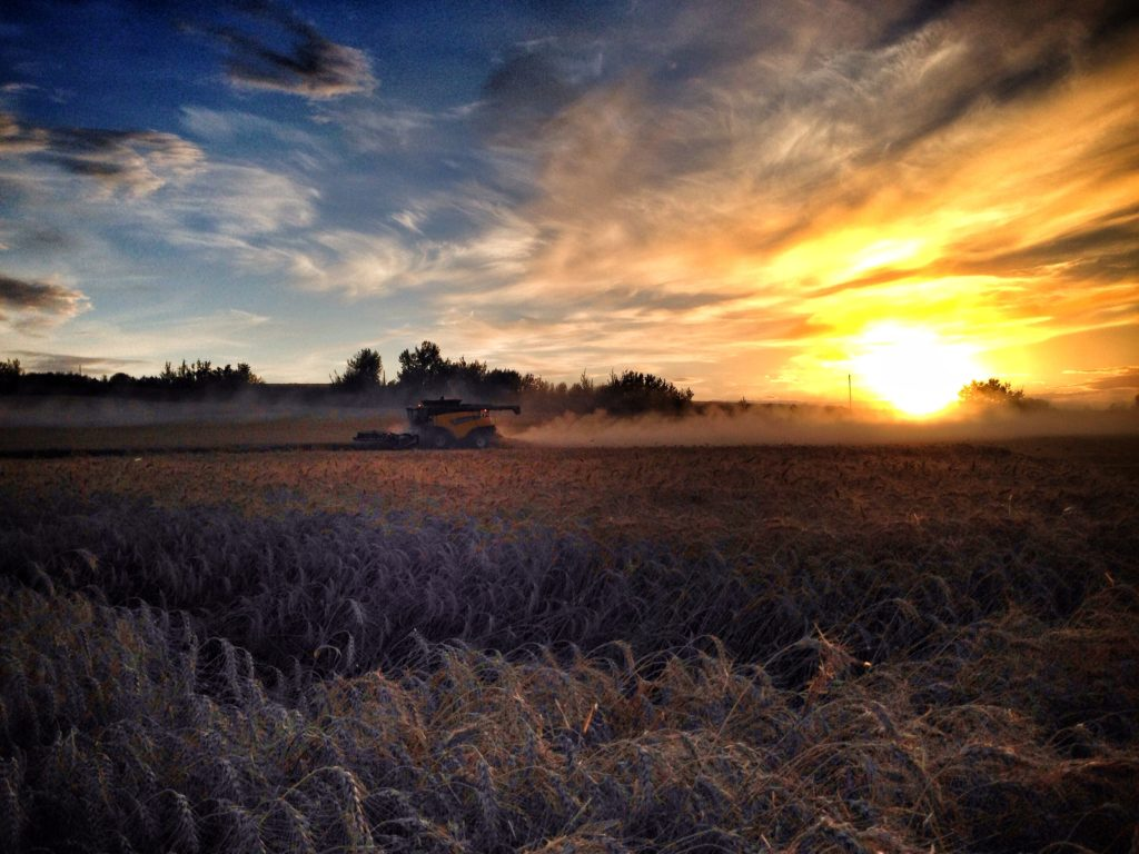 New Holland Wheat Harvest in Alberta