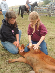 """Photo from """"Our Star Goes West."""" Cowgirl Montella helps Rianna hold down her first calf during branding day."""