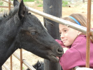 """Photo from """"Our Star Goes West"""" Sheridan visits with the new foal at the ranch. The new book features many new experiences with ranch life for the girls."""