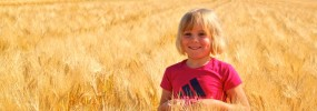 The Pinke Post Barley Field
