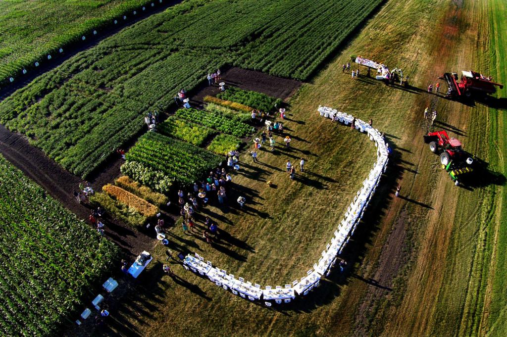 Banquet In A Field