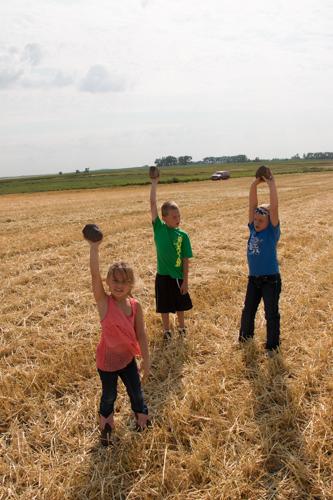 Harvest (5 of 7)