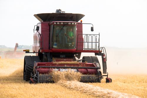 Harvest (6 of 7)