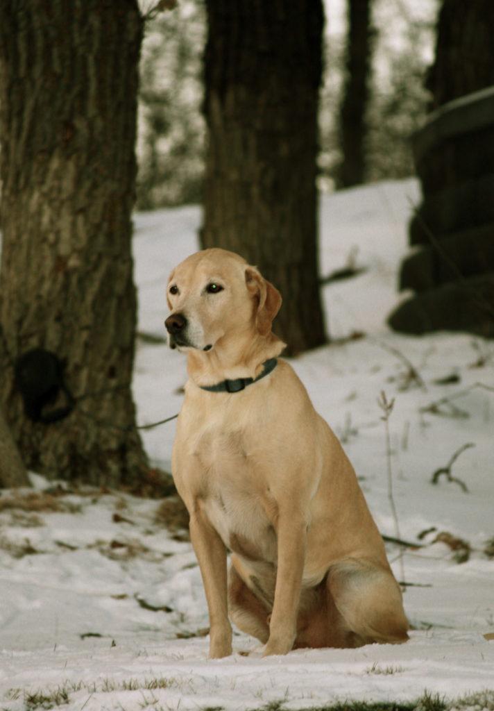 Saying Farewell To Charlie Dog
